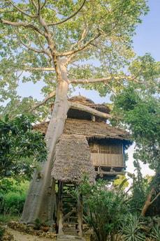 Tea house treehouse
