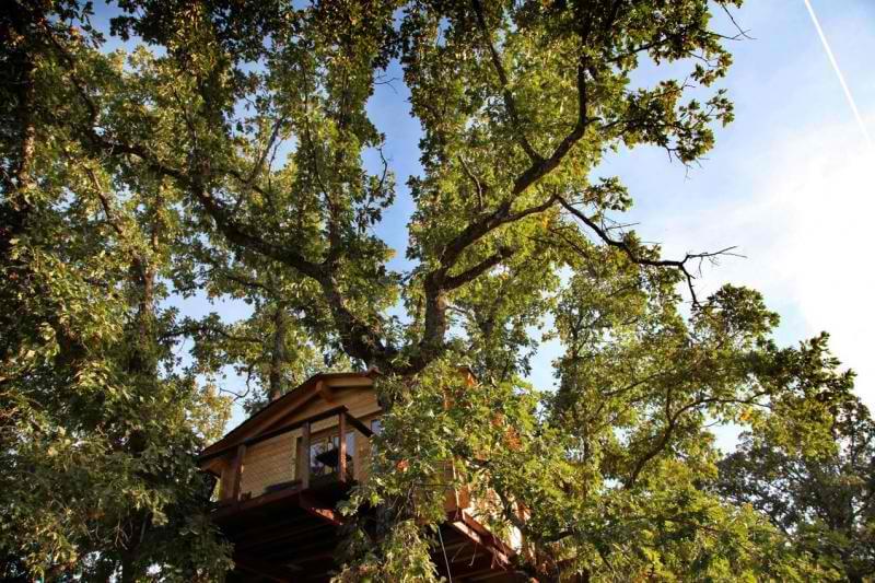 Casa del árbol España Cáceres