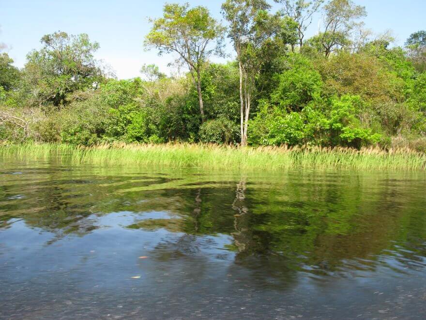 Nature on the Rio Negro Manaus